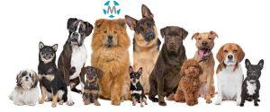 Seguro de mascotas correduria Medrano
